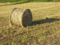 hay_field_bale_summer